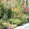 Плануємо миксбордер: підбираємо рослини