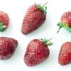 Чому не плодоносить полуниця?