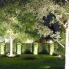 Підсвічування і освітлення дерев