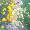 Сподобалися квіти, хто знає їх назву?