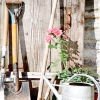 Посадка саджанців троянд: підбираємо місце