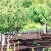 Правила посадки багаторічних рослин
