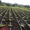 Розсада овочів, посів у дві черги, секрети врожайності