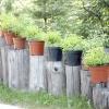 Рослини для наземних кашпо