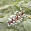 Рослини з яскравими плодами, що прикрашають осінній сад