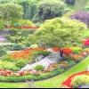 Рослинні композиції і невибагливі рослини для саду