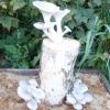 Різні способи вирощування грибів