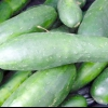 Різні строки збору врожаю огірків і оптимальні умови зберігання огірків