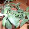 Розмноження та живцювання рослин
