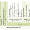 Розоцветние пеларгонії: вибираємо сорт, забезпечуємо умови
