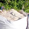 Троянди: полив, обробка грунту, підгодівлі