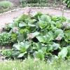 Садові доріжки: вдалі рішення. фото
