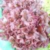 Салатна феєрія з весни до осені