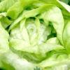 Салатні овочі