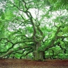 Найцікавіші факти про дерева