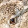 Збалансований комбікорм для кролів - запорука здоров'я ваших тваринок