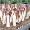 Їстівні рослини: які листя можна їсти
