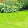 Секрети газонокосильщика або газон своїми руками