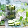 Секрети заготовки солоних і маринованих огірків