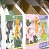 Сибірські іриси: купівля, посадка, підгодівлі, розмноження, захист від хвороб і шкідників