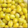 Слива «мірабель» з фото фруктів і плодів