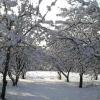 Догляд за садом в зимовий період