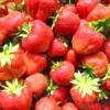 Урожайна полуниця. технологія вирощування