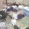 Варіанти розведення кроликів в домашніх умовах, на дачі і в промислових масштабах