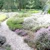 Вереси в ландшафтному дизайні саду