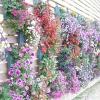 Вертикальне озеленення саду і ділянки на дачі