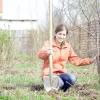 Весняна посадка дерев і чагарників