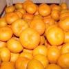 Види і сорти мандаринів