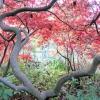 Види корисних дерев та їх застосування