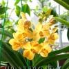 Види орхідей