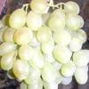 Виноград метеорит