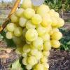 Виноград супер-екстра