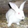 Можливі проблеми зі здоров'ям у кроликів, як запобігти і чим лікувати?