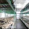 Вирощуємо гриби: бізнес план