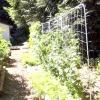 Вирощування баклажанів в теплиці зручніше і ефективніше, ніж вирощування в городі