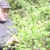 Вирощування мигдалю: розмноження і посадка, догляд та пересадка
