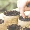 Вирощування сосни звичайної