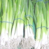 Вирощування зеленої цибулі