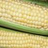 Виростити цукрову кукурудзу на дачній ділянці