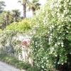 Виставка троянд Нікітського ботанічного саду