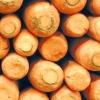 Заготівля моркви на зиму і кращі сорти моркви для тривалого зберігання