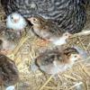 Захист від ненажерливих птахів на ділянці