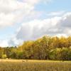 Земля в котеджному селищі серпуховского району діброва