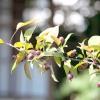 Зимостійкі сорти плодових дерев: яблуня, груша, слива, вишня, черешня