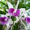 Значення орхідеї