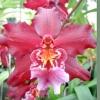 Знайомство з орхідеями